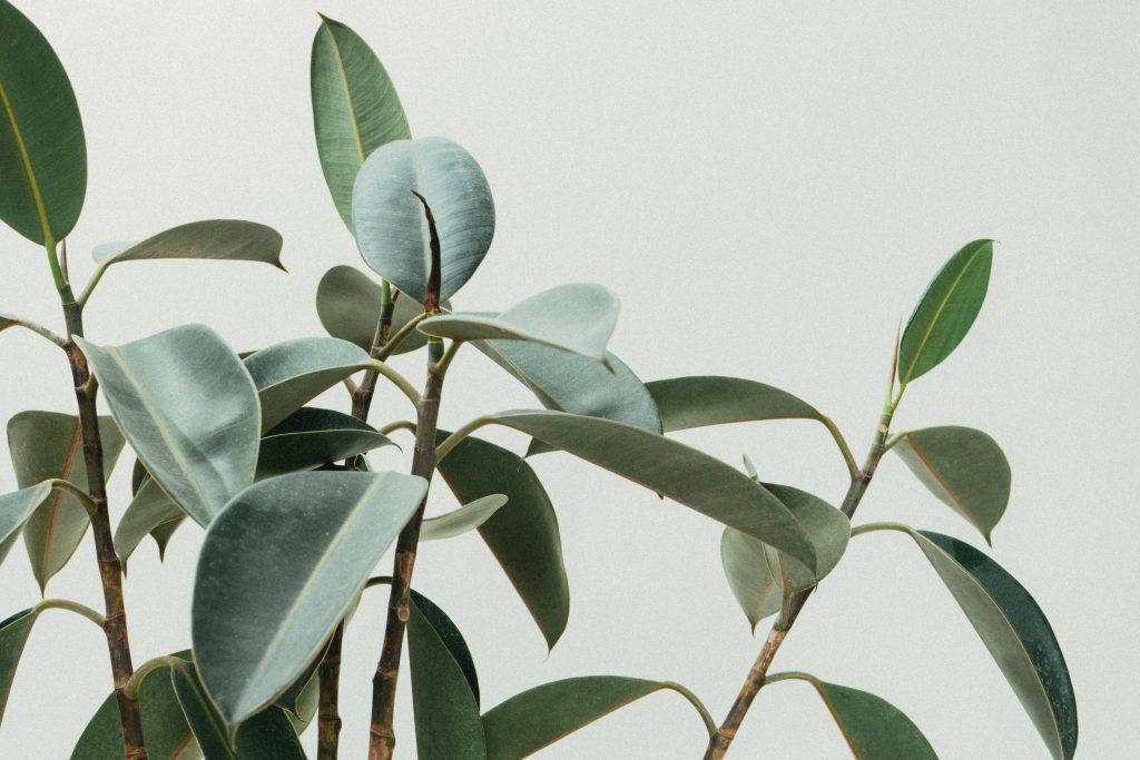 homey-flow-voorbeeld-plant